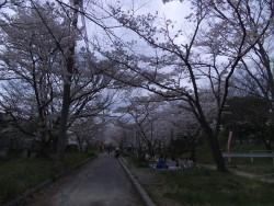 妙見河原 <お花見>