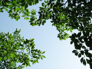 tree-photo